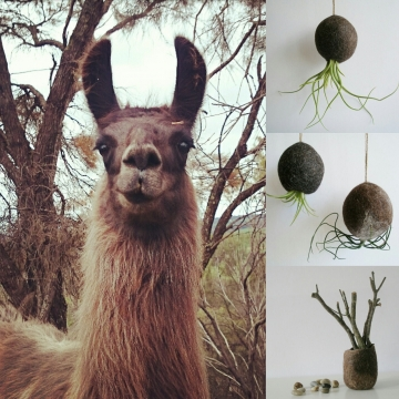 The Fox Hill Llamas with Some of Their Products