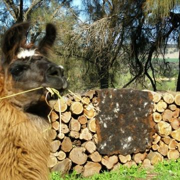Authentic Llama Fibre Rug. Eco-Friendly Home Accent