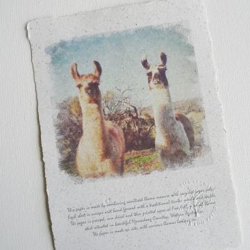 Crias, Llama Poop Paper, Llama Photo, Baby Animals, Llama Picture, Llamas, Farm Animals, Animal Lovers, Animal Photograph, Unique Art, Eco