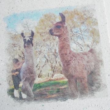 Llamas, Llama Poo Paper Art, Llama Picture, Llama Crias,  Baby Animals, Llama Picture, Nursery Art, Baby Animals, Llama Gift, Friends