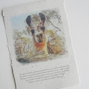 Llama Art,  Llama Poo Paper Print, Llama Photo, Llama Momma, Llama Picture, Llama, Farm Animals, Llama Gift, Animal Photography, Animal Art