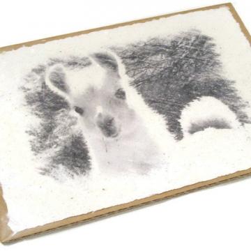Llama Print - Llama Poo Paper - Limited Edition - Llama Cria - Animal Print - Farm Animal Art - Unique Art - Llama Art - Llama Picture