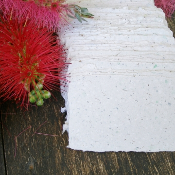 20 Cards with Bottlebrush Stamens