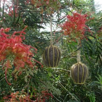 Bird Nesters, Llama Fibre Set of Two, Yellow Lanterns, Native Bird Nesters, Gift Boxed, Bird Gift, Birds, Gift Set, Hanging Lanterns, Decor