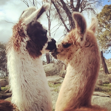 Peppa and Quasi