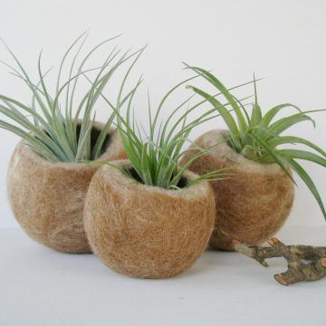Set of 3 Llama Fibre Pods
