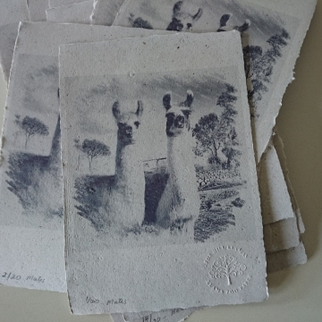 Mates - Llama Poo Paper Print - Limited Edition Print - Llama Crias - Baby Animals Print - Best Friends - Llama Art - Llama Picture